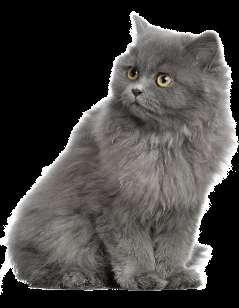 Кошки на телефон картинки